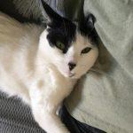 Foto del perfil de Bea